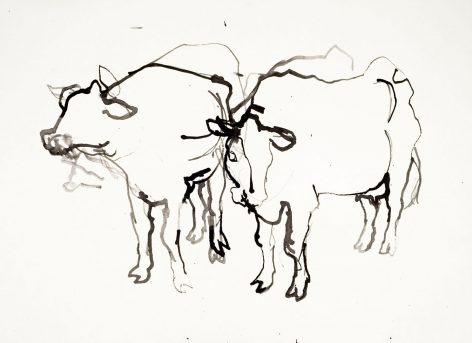 Series Cow